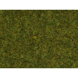 Statická tráva, lúka, 4 mm, 20 g  NO08361
