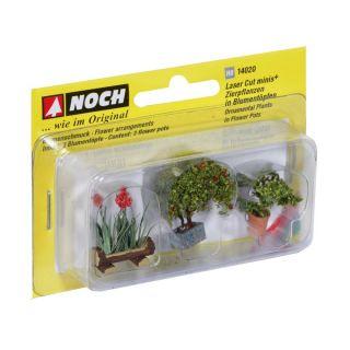 Okrasné rostliny v květináčích 14020