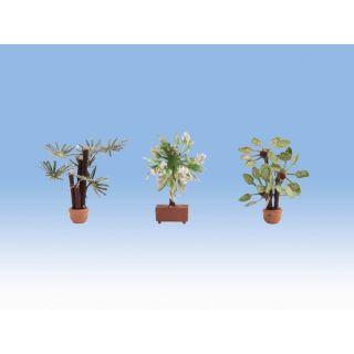 Stredomorské rastliny 3ks  NO14023