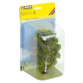 Dvojitá breza, 19 cm NO21641